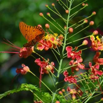 junio-mariposas-2016-verdemar-011