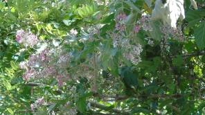 curso-de-introduccion-de-la-botanica-021