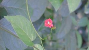 curso-de-introduccion-de-la-botanica-054